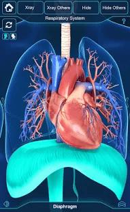 My, Respiratory, System, Anatomy, 3D-модель, органов, дыхания