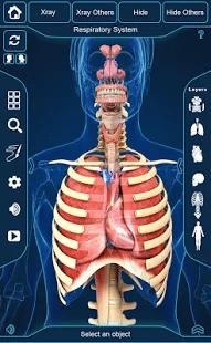 My Respiratory, System. Anatomy, 3D-модель, органов, дыхания